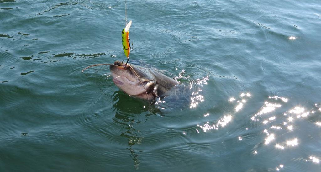 рыболовные застежки Eight-lock Pontoon 21 фото